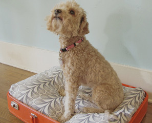 For Fido: DIY Vintage Suitcase Dog Bed