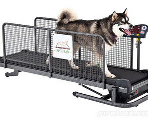 Fit Fur Life Dog Treadmill