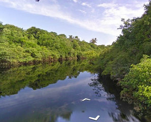 Explore The Amazon With Google River View