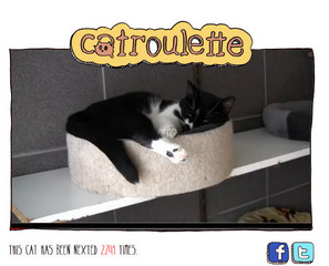 CatRoulette: ChatRoulette For Adoptable Cats