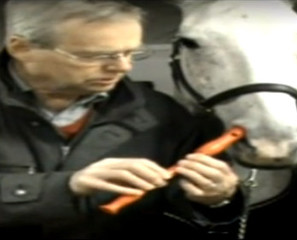 WTF?: Horse Plays Recorder With Nose