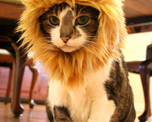 Turn Your Cat Into A Lion With A Mane