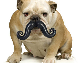 Humunga Stache Mustache Dog Chew Toy